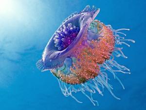 Crown Jellyfish (Netrostoma setouchina, Kronenqualle), Ma... by Henry Jager