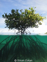 Tree of life ... (Underwater which I love most)   Hopeful... by Sinan Oztan