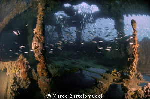 INSIDE THE BARON GAUTSCH WRECK by Marco Bartolomucci