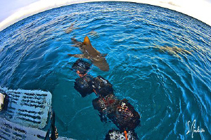 One of the best topside activities.....coffee,bait and Le... by Steven Anderson