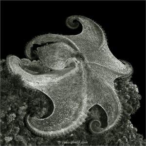 [:b:]pancake[:/b:] :) by Roland Bach