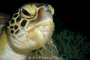 Hungry turtle chewing on soft coral by Erich Reboucas