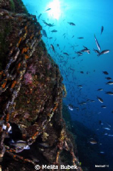 Kostrena home-reef, NIKON D90, TOKINA 10-17mm by Melita Bubek