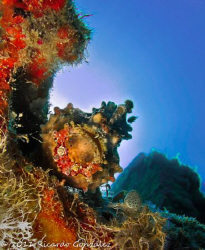Make up on.... pose.... smile (or not). Warty Frogfish by Ricardo Gonzalez
