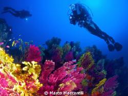 Immersione la Montagna di Scilla by Marco Maccarelli