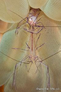 shrimp posers. by Graeme Cole