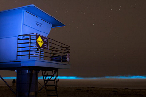 Bioluminescent waves during a red tide by Matthew Fischbach