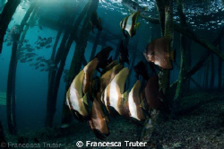 Late afternoon snorkel under a jetty. by Francesca Truter