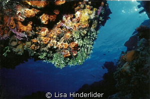 From under a ledge- Cozumel by Lisa Hinderlider