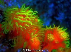 Soft Coral! by Elia Correia