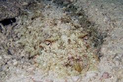 cuttlefish....: ) by Bernard Maglana