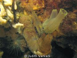 North sea, shrimp. by Judith Verkerk