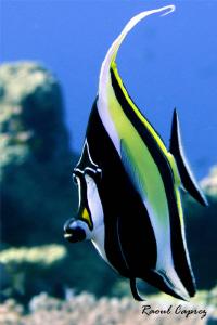 Nemo's friend :-) by Raoul Caprez