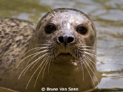 I could not catch him during the dive !!  But I keep tryi... by Bruno Van Saen