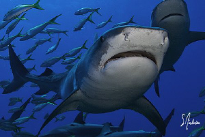 A beautiful day brought the presence of lots of sharks as... by Steven Anderson