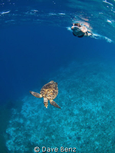 Snorkel dive at Klein Curacao, Netherland Antilles. Amaz... by Dave Benz