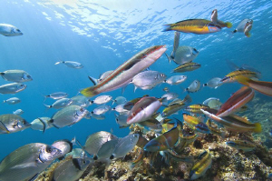 [:b:]RUSH HOUR[:/b:] the mediterranean sea still alive by Roland Bach