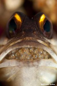 Eyes by William Loke