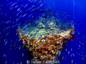 I entered this photo last year but have since discovered ... by Jackie Campbell