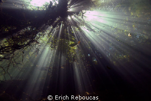 Sunlight coming down through the trees. Prata River, Cent... by Erich Reboucas