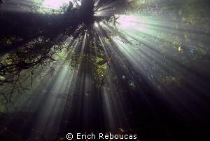 Sunlight coming down through the trees. Prata River, Cent... by Erich Reboucas