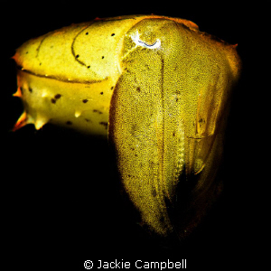 Mellow yellow :)