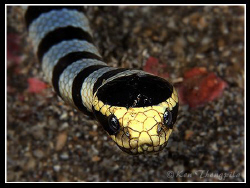 Facing with Banded Sea Snake by Ken Thongpila