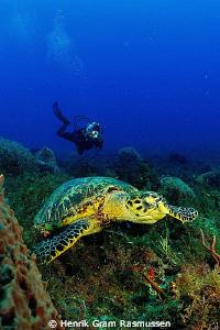 Turtle with Diver by Henrik Gram Rasmussen