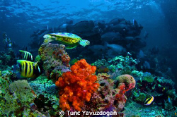 The Reef !! by Tunc Yavuzdogan