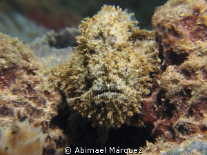 Face to face with a small frogfish. by Abimael Márquez