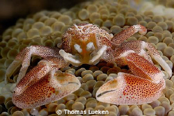 found in Lembeh; D200 by Thomas Lueken