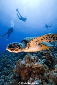 Turtle & divers by Erich Reboucas