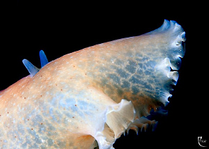 Flatworm closeup. 60mm Makro lens with +4 diopter attached. by Rico Besserdich