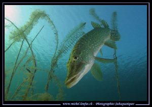 My good friend Mister Pike... ;O)... by Michel Lonfat