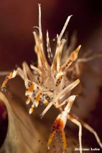 Tiger Shrimp by William Loke