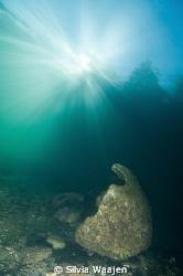 reefball in the sun by Silvia Waajen