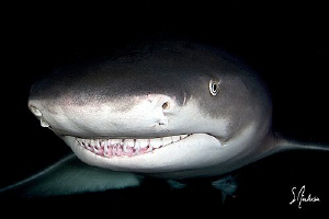 Awesome diving at night with these gentle but very curiou... by Steven Anderson