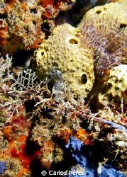 """Find ME"" Sea Horse at crash Boat Beach piers. olympus EP... by Carlos Pérez"