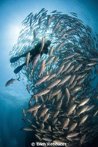 Diver and jacks by Erich Reboucas