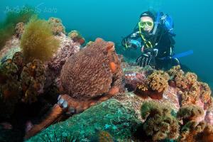 Extreme close-up :-) / Giant octopus Dofleini by Boris Pamikov