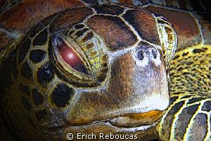 Turtle Portrait - Cartoon Version by Erich Reboucas