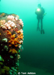 Diver at St Abbs by Tom Ashton