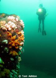 Diver at St Abbs by Tom Ashton