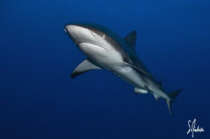 This image was taken during a dive at Hammertime Reef - B... by Steven Anderson
