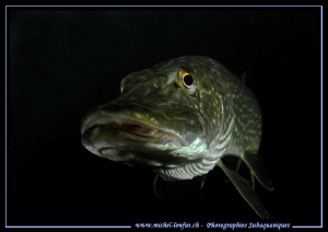 Portrait of a Pike Fish... :O)... by Michel Lonfat