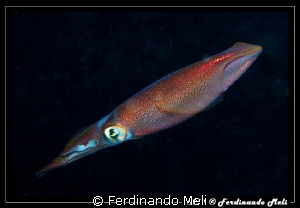 A squid in the night. by Ferdinando Meli