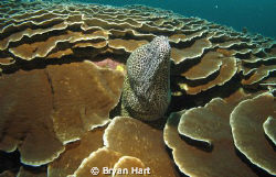 A low viz dive on a deep , not very well know reef in Sod... by Bryan Hart