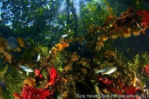 Over? Under ? @ Kakaban JellyFish Lake. by Tunc Yavuzdogan