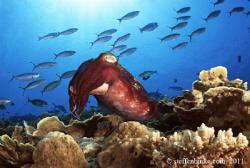Cuttlefish by Steffen Binke