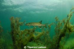 found in a German lake, D200 by Thomas Lueken